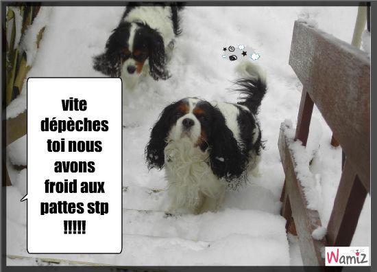 vive la neige !!!!!!, lolcats réalisé sur Wamiz