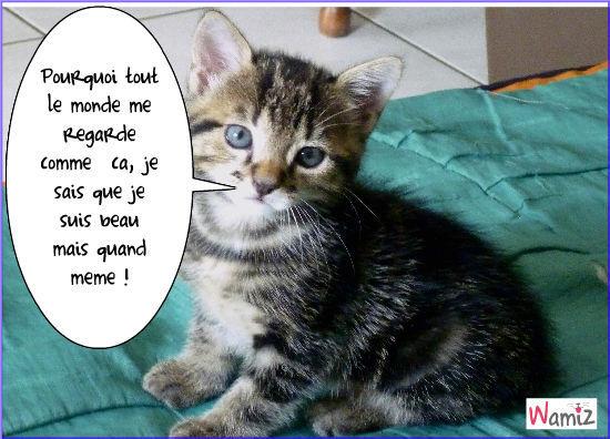 le plus beau des chats, lolcats réalisé sur Wamiz