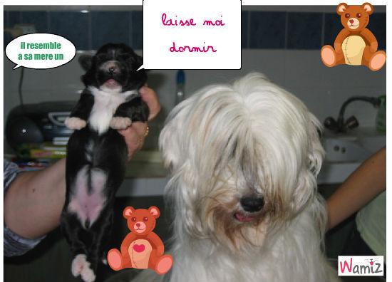 achete un chien, lolcats réalisé sur Wamiz