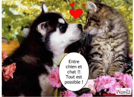 Entre chien et chat, lolcats réalisé sur Wamiz