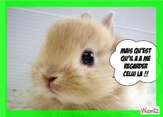 Le petit lapin lapin ..bien mal poli , lolcats réalisé sur Wamiz