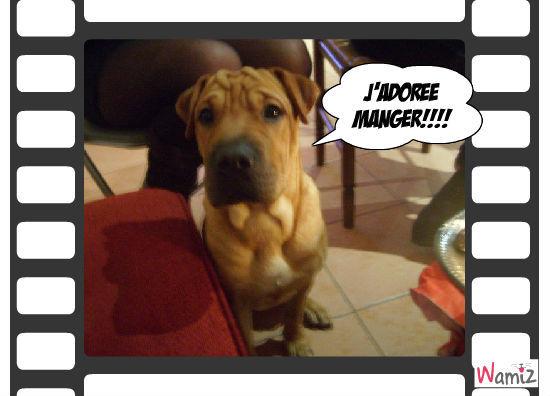 Jackson est gourmand!!, lolcats réalisé sur Wamiz