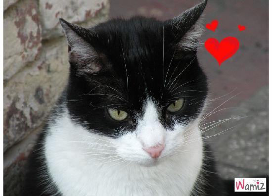mon chat, lolcats réalisé sur Wamiz