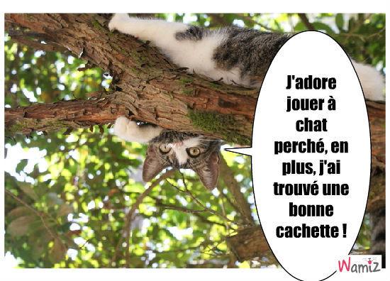 chat perché et caché, lolcats réalisé sur Wamiz