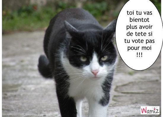 vote pour moi !!, lolcats réalisé sur Wamiz