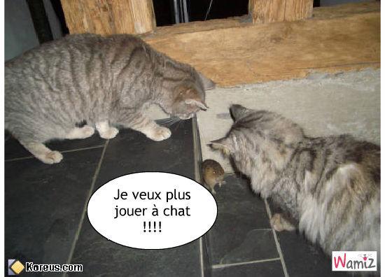 jeu du chat et de la souris, lolcats réalisé sur Wamiz
