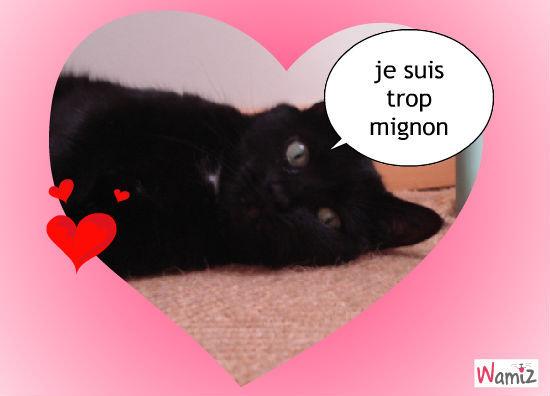 le tit chat noir, lolcats réalisé sur Wamiz