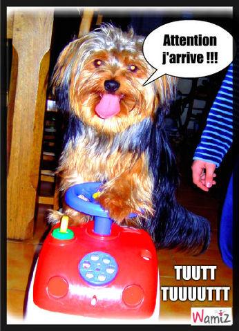 Il parait que les chiens savent conduire .. Il Parait ..., lolcats réalisé sur Wamiz