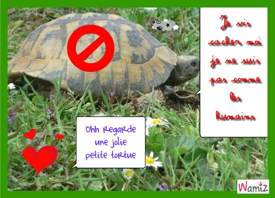 Une vie de tortue, lolcats réalisé sur Wamiz