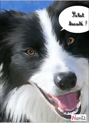 Un chien qui séduit!, lolcats réalisé sur Wamiz
