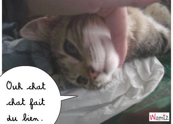 chat fait du bien, lolcats réalisé sur Wamiz