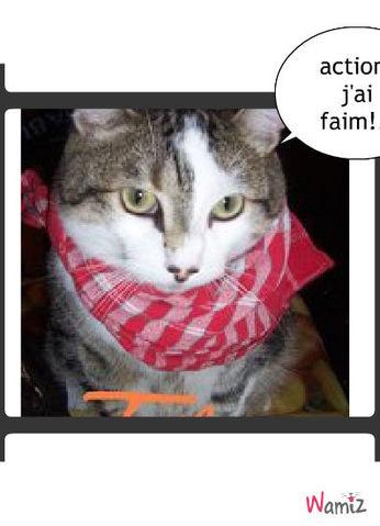 le roi des chat, lolcats réalisé sur Wamiz