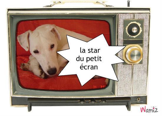 diezel star de la tv, lolcats réalisé sur Wamiz