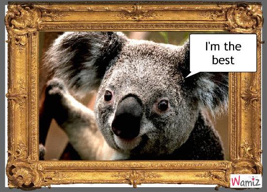 koala, lolcats réalisé sur Wamiz
