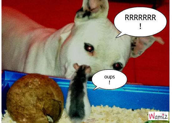 chien et rongeur, lolcats réalisé sur Wamiz