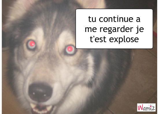 chien enrager, lolcats réalisé sur Wamiz