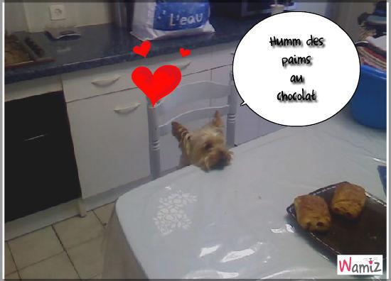 Balou qui veut mager des paimt au chocolat, lolcats réalisé sur Wamiz