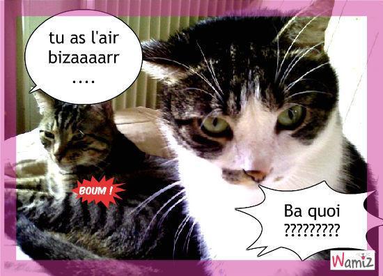 le chat, lolcats réalisé sur Wamiz