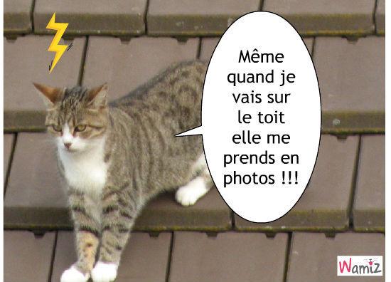 des photos !!!, lolcats réalisé sur Wamiz