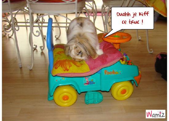 le lapin et le jouet, lolcats réalisé sur Wamiz