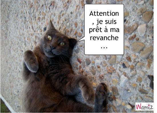 Le chat féroce, lolcats réalisé sur Wamiz