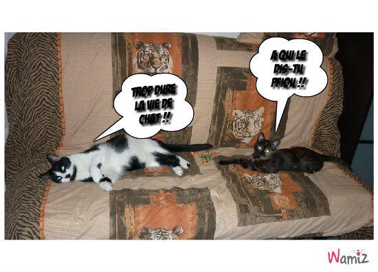 la viie de chat , lolcats réalisé sur Wamiz