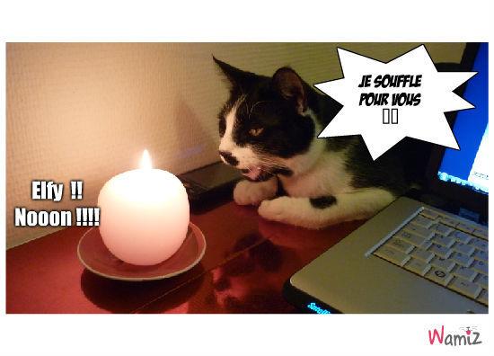 le chat à bougie, lolcats réalisé sur Wamiz