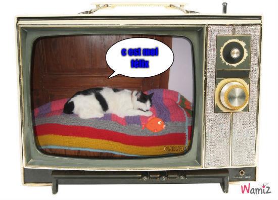 félix le chat, lolcats réalisé sur Wamiz