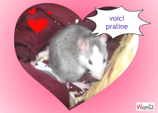 praline, lolcats réalisé sur Wamiz
