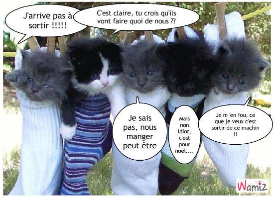les petits chats et leurs idées, lolcats réalisé sur Wamiz