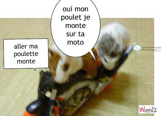 des souris qui font de la moto, lolcats réalisé sur Wamiz