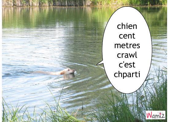 1 2 3 nager, lolcats réalisé sur Wamiz