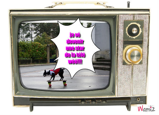 La star de la télé!!!, lolcats réalisé sur Wamiz