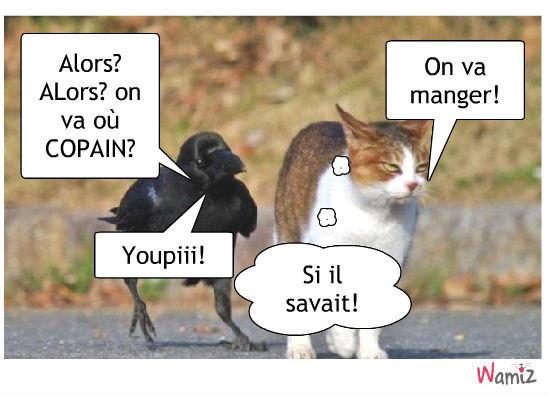 Le corbeau et le chat, lolcats réalisé sur Wamiz