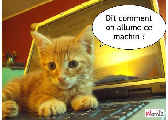 l'ordinateur, lolcats réalisé sur Wamiz