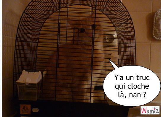 un chat en cage, lolcats réalisé sur Wamiz