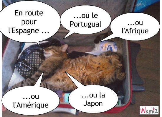 vacances de chat, lolcats réalisé sur Wamiz