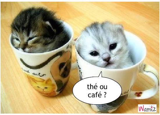 thé ou café ?, lolcats réalisé sur Wamiz