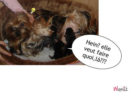 une chienne attentionnée et ses petits, lolcats réalisé sur Wamiz
