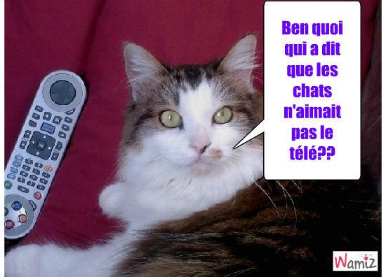 Les chats et la télé., lolcats réalisé sur Wamiz