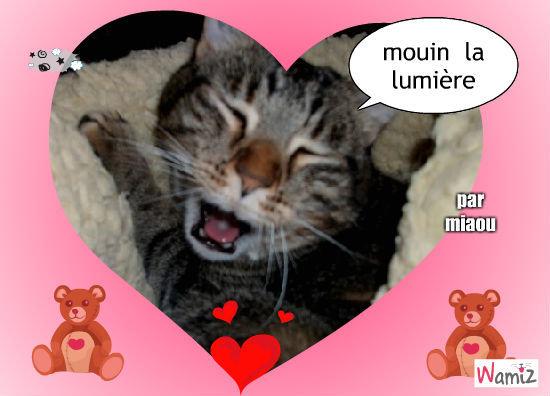 ne jamais laisser un chaton sans lumière, lolcats réalisé sur Wamiz