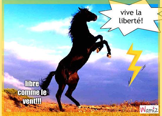 liberté, lolcats réalisé sur Wamiz