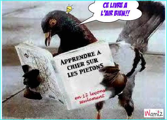 le pigeon, lolcats réalisé sur Wamiz