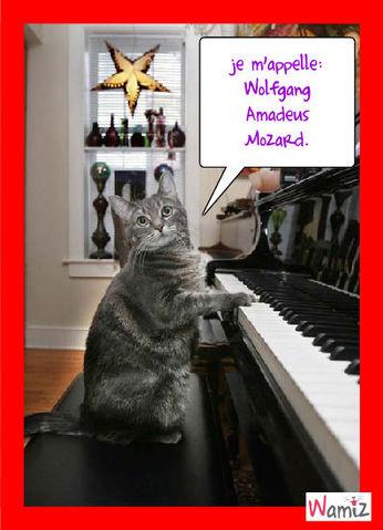 La musique dans les pattes !!!, lolcats réalisé sur Wamiz