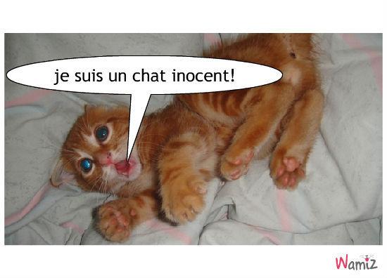 chat peureu, lolcats réalisé sur Wamiz