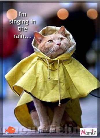 I'm singing in the rain..., lolcats réalisé sur Wamiz