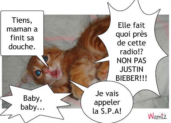 Le chat anti-Justin bieber, lolcats réalisé sur Wamiz