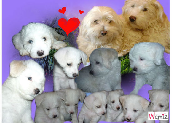 Mes amours de chiens   , lolcats réalisé sur Wamiz