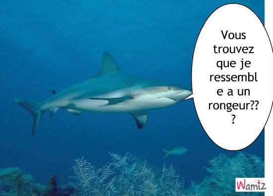 requin, lolcats réalisé sur Wamiz