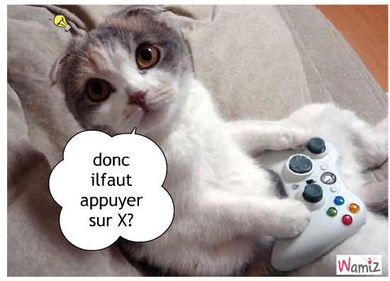 Xbox, lolcats réalisé sur Wamiz